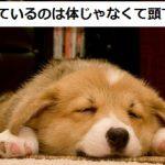 疲れているのは体じゃなくて〇〇です
